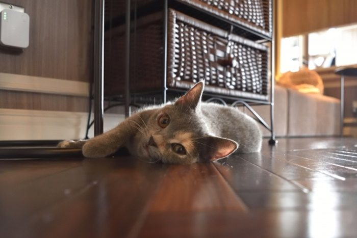ぬくぬくの床暖房は猫も幸せ