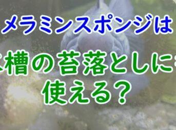 メラミンスポンジは水槽の苔落としにも使える?